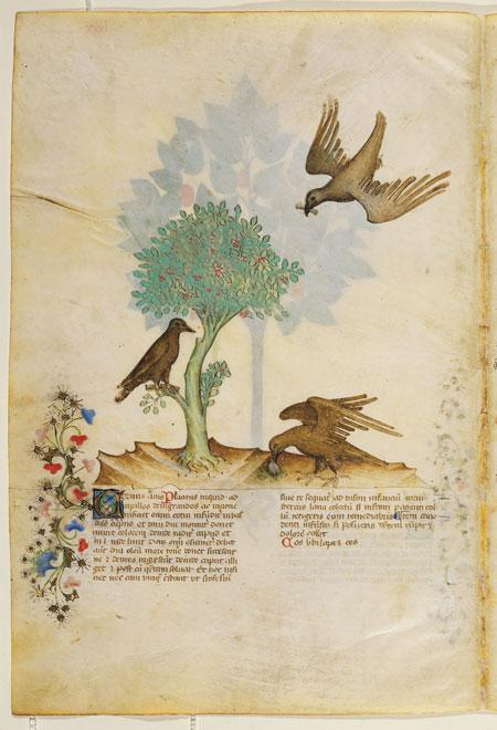 Piante Curative : Historia plantarum « i facsimili franco cosimo panini